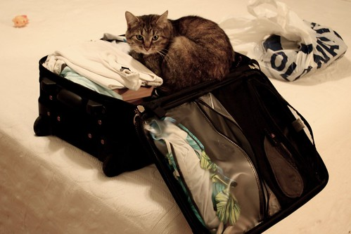Cat In A Suitcase. Cat in a Suitcase