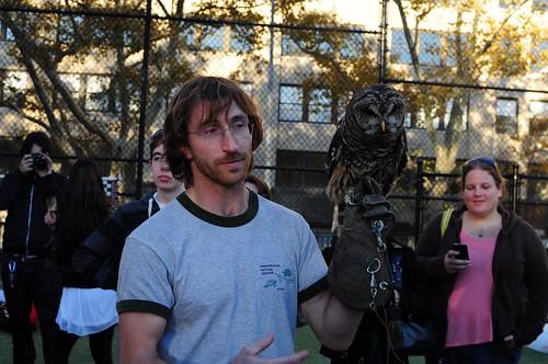 Bard Owl 2