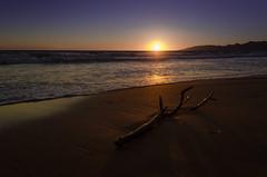 Dusk (Cyril Barzasi) Tags: sunset sky landscape sea water reflection nature beach blue sun italy ocean branch romantic evening horizon sand seascape tide dawn seashore dusk sicily bough bluehour no person fair weather twilight environment