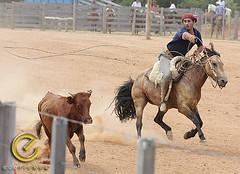 IMG_6175 (Edu Rickes) Tags: brazil horses brasil caballos rodeo cavalos rs riograndedosul gaúchos gaúchas beautifulshots piratini gineteada canon450d brazilianphotographers fotógrafosbrasileiros tirodelaço todososdireitosreservados fotógrafosgaúchos culturagaúcha edurickes belasimagens rodeiogaucho edurickesproduçõesfotográficas canonrebeldigitaleosxsi copyright©2010 fotografiaslegais