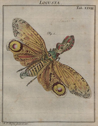 Locusta V.2 a