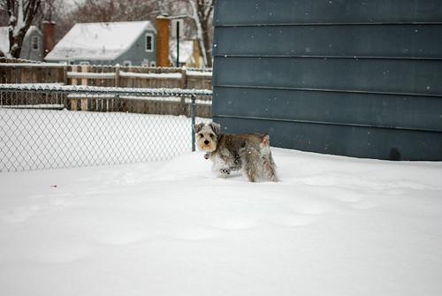 snow bunny harpo