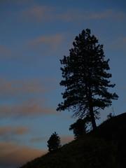 (^Troy^) Tags: morning oregon washington bluemountains 2009 tigercanyon ponderosapine platinumheartaward