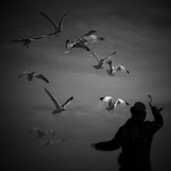 The Wizard (isvibilsky) Tags: bw noiretblanc seagull cinematic visualpoetry dreamcatcher artlibres