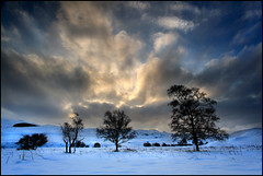 Twos Company (angus clyne) Tags: trees winter cloud snow storm cold tree field clouds scotland long frost branch wind cloudy snowy bare extreme perthshire deep willow snowing birch scrub drifts drift flikcr amulree leefilters colorphotoaward