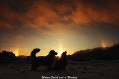 Sunrise with halo (waltersoluh) Tags: winter sky cloud dog snow nature sunrise halo rs shilouette fpg fineartphotos mywinners platinumphoto visiongroup theunforgettablepictures alwaysexc colorsofthesoul redmatrix magicunicornverybest adrinnesmagicalmoments goldsealings