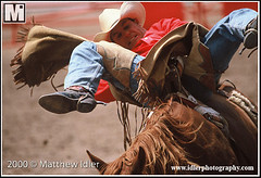 Cheyenne Frontier Days Rodeo on July 24, 2000 (Matthew Idler Photography) Tags: horse usa west bareback photo cowboy riding prca western rodeo wyoming livestock bronc cheyenne wy contestant cfd competitor barebackriding roughstock broncrider westernlife buckinghorse prorodeo idler cheyennefrontierdays rodeocowboy barebackrider broncride cfdrodeo rodeoevent westernsport daddyofthemall 2000cheyennefrontierdaysrodeo rodeocontestant ridingglove matthewidler idlerphoto matthewidlerphotography photoidler wyomingphotographer