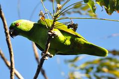 Parc Santa  Rosa, Forêt tropical sèche