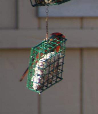 Birdiered2