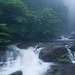 Kusugawa trailhead, Yakushima Island