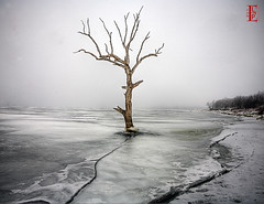 Ice, Fog, Tree (Kansas Poetry (Patrick)) Tags: ice fog patrick deadtree nancy and loves forever now secretgarden locas skypainting clintonlake shieldofexcellence flickraward momentarylapseofreason unforgettablepictures thebestshot bignature spiritofphotography ddsnet artofimages friendsofelbrujo bestcapturesaoi coloursoftheheart sapphireaward passionsoftheheart elitegalleryaoi