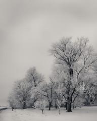 IMG_4490_1500_90 (A Fresh Perspective | Zak Metz) Tags: winter ice minnesota frost kenyon canonefs1755mmf28isusm zakmetz canoneos40d wwwafpphotographycom 5073849069