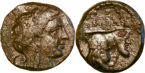 001-01 Apollo Forepart man-headed bull POMAION Litra. The FIRST Roman Coin minted in Naples, 326BC