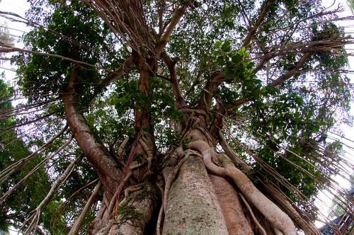 Borobudur 01