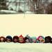 A Family of Snowbunnies - 207/365 ADAD