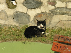 Bursa cats (CyberMacs) Tags: cute animal cat turkey türkiye kitty törökország kedi bursa infocus highquality bursacity