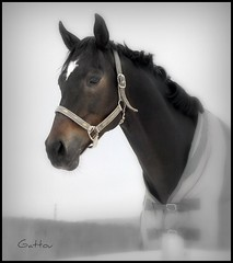 Azimut (Gattou - Lucie Provencher) Tags: gold paw award topseven lesamisdupetitprince updatecollection соз