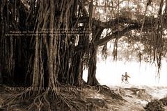 roots............ [Shimulia, Savar, Dhaka, Bangladesh] (Ideas_R_Bulletproof) Tags: life tree history monochrome sepia contrast children nikon roots human photowalk ttl dhaka tradition bangladesh banyan savar nikkoraf50mmf14d d700 shimulia
