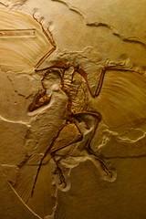 始祖鳥 画像41