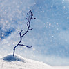 Big Snowstorm Small Twig (koinis) Tags: blue snow canon john square snowflakes frozen big frost bokeh small snowstorm twig l 70200mm sqr 500x500 f4l hbw koinberg koinis