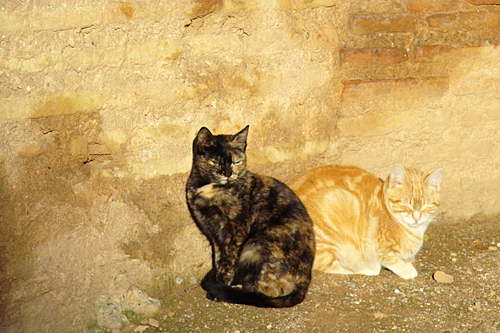moorish-cats