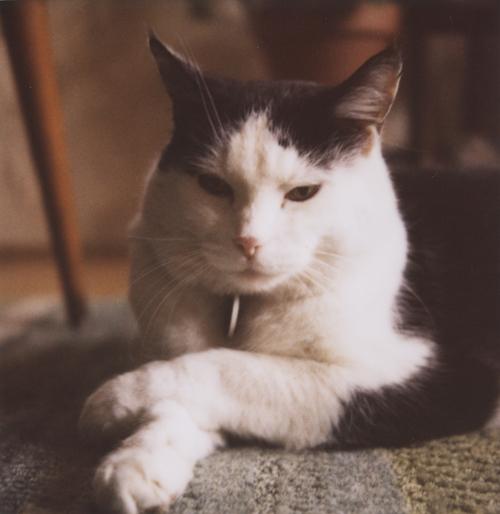 Such a proper cat.