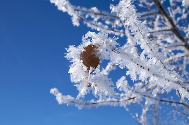 WinterWalk_27
