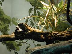 Zoo of Denver  DSCN0176_1