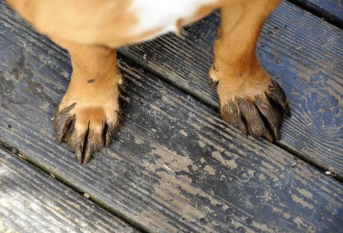 mud paws.