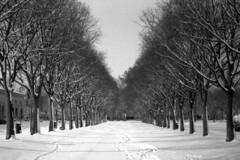 wrr048b_s (Photeo) Tags: trees blackandwhite bw snow film vanishingpoint rangefinder bn mantova vanishing ilford mantua ilfordfp4plus werra carlzeissjena carlzeissjenatessar50mmf28 werra5