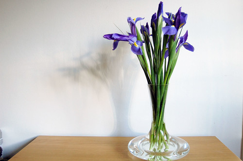 decanted iris