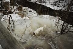Nietzsche on Ice