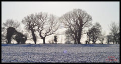 Snow Fields 03 (Kirk09) Tags: trees ireland sunset england orange sun white snow silhouette wales scotland snowy south north tracks east marks southern crewe fields northern blizzard eastern lined nantwich smallwood sandbach alsager weast weastern
