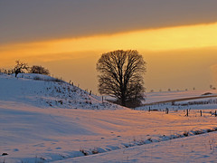 A touch of gold (RainerSchuetz) Tags: winter sunset snow tree creek oak ditch sundown meadow winterlandscape tistheseason vob idream abigfave anawesomeshot superaplus aplusphoto 100commentgroup phvalue miasbest miasexcellence daarklands yourwonderland coth5 galleryofdreams coppercloudsilvernsun mygearandmepremium mygearandmebronze mygearandmesilver mygearandmegold mygearandmeplatinum mygearandmediamond