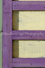 "Alphabet Photo Art - letter ""E"" (bevilled edge photography) Tags: letters alphabetletter alphabetphoto alphabetphotos letterphoto photoletter photoletterart alphabetphotograph"