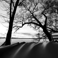 Adrift (Robert Snache - Spirithands.net) Tags: lake couchiching ramara frozen drifting snow adrift drift trees black white rbsfavs robertsnache winter cold clear ice spirithands snacheplusfam