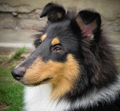 Sirius 6 meses