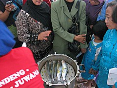 Demo Masak Bandeng Presto