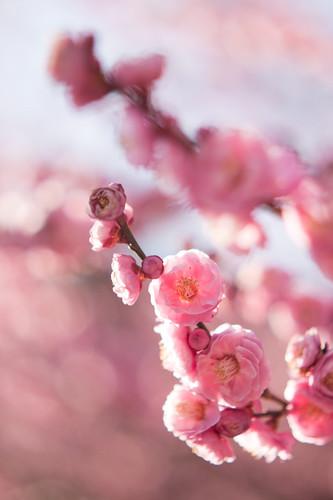 spring pink*