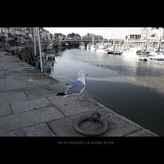 Seagull in a harbor (Photographe Nantes - La Baule Hadrien BRUNNER) Tags: ocean old city travel winter sea sky mer white bird fall tourism nature water animal rock stone port de landscape boats grey freedom coast la harbor pier boat town flying seaside still dock rocks day sailing ship cityscape photographie view wildlife seagull gull free vessel calm atlantic leisure serene loire pays 44 brunner seaport mouette hadrien baule photographe atlantique pouliguen wwwhadrienbrunnercom