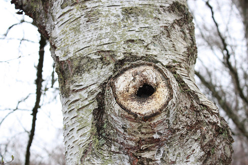 Tree knothole