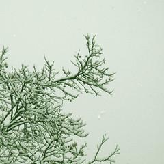 oo (insomnia.) Tags: barcelona snow nieve neu