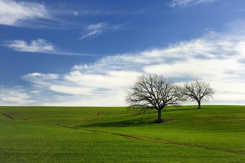 フリー画像| 自然風景| 丘の風景| 樹木の風景| 草原の風景|       フリー素材|