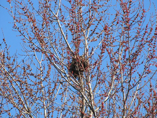 Zoomed trees budding