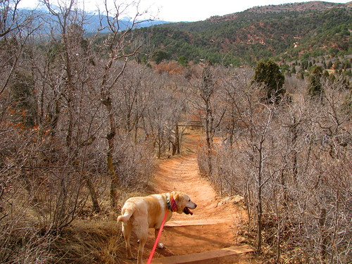 Sadie heads down the trail