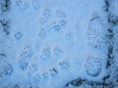 Family paw prints..