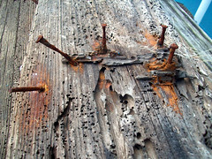 Rusty nails (Chris - Topher) Tags: water bay nc kill north hills sound carolina devil outer banks obx colington