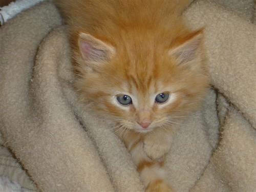 kitty_kitty