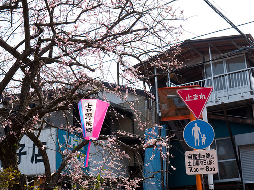 Street Plum Blossoms