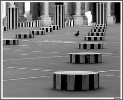 A pigeon got lost in Paris (jackfre2 (on a trip-voyage-reis-reise)) Tags: sculpture white black paris france lines buildings artist contemporaryart pigeon stripes patterns columns courtyard pillars buren debate artinstallation colonnes urbanblackandwhite jardinspalaisroyal mygearandmepremium mygearandmebronze mygearandmesilver mygearandmegold mygearandmeplatinum mygearandmediamond mixedstripes